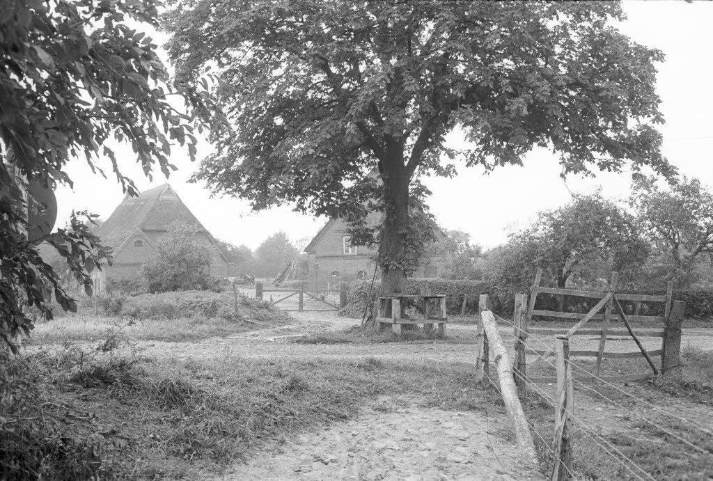 Norddeutsches Dorf Dörte Hansen Mittagsstunde