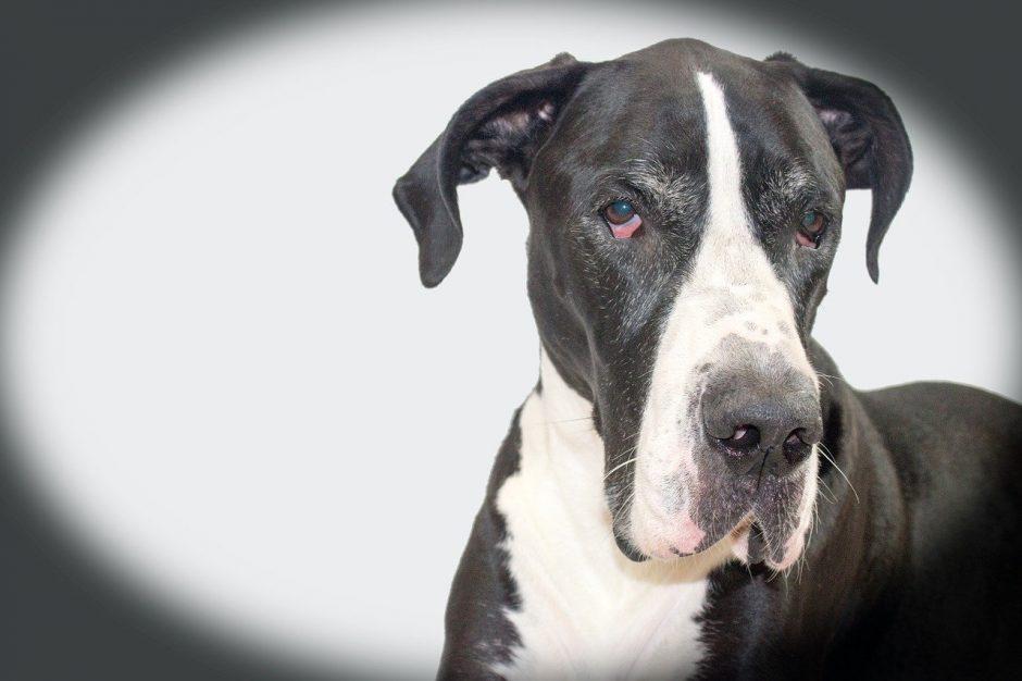 Dogge - Der Freund