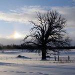 Ali Smith - Winter - Der Jahreszeitenzyklus