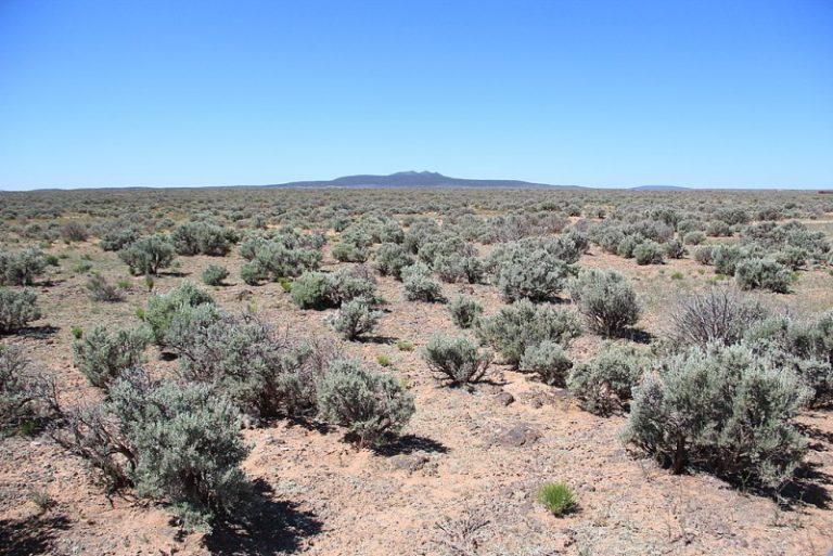 Mexikanische Wüste