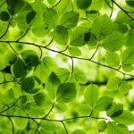 Ali Smith - Frühling - Der Jahreszeitenzyklus